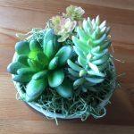 100均のアイテムを使ったインテリア植物の簡単リメイク