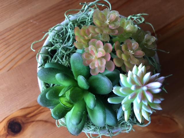 100均のアイテムを使ったインテリア植物の簡単リメイク3