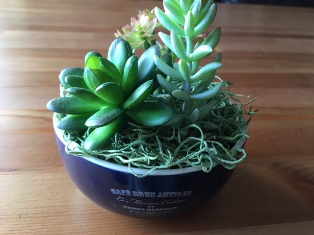 100均のアイテムを使ったインテリア植物の簡単リメイク2