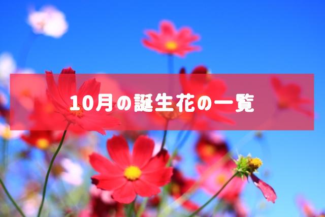 10月の誕生花の一覧 | 記念日・プレゼント・アレンジメント