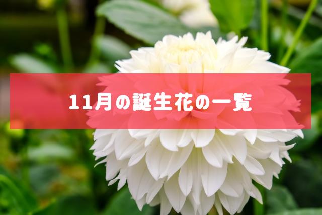 11月の誕生花の一覧 | 記念日・プレゼント・アレンジメント