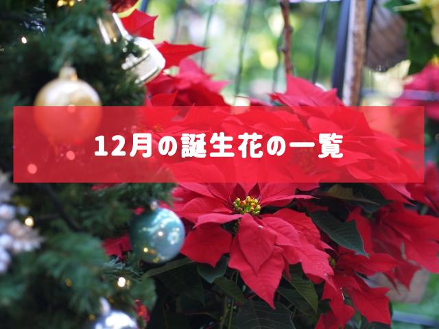 12月の誕生花の一覧 | 記念日・プレゼント・アレンジメント