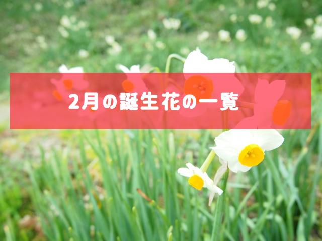 2月の誕生花の一覧 | 記念日・プレゼント・アレンジメント