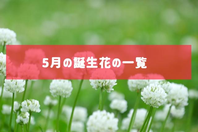 5月の誕生花の一覧 | 記念日・プレゼント・アレンジメント
