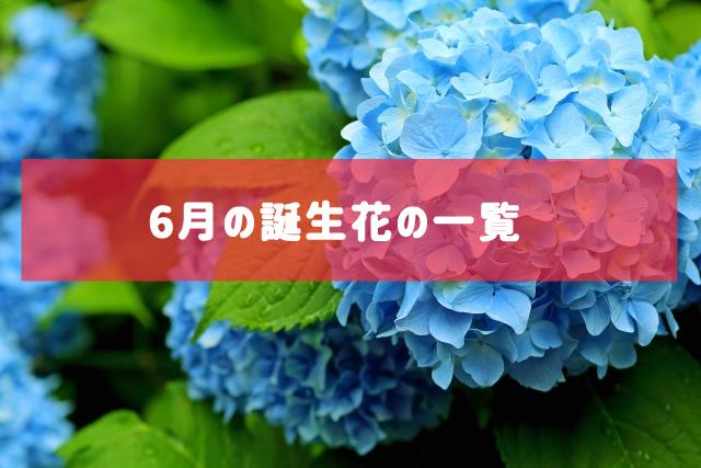 6月の誕生花の一覧 | 記念日・プレゼント・アレンジメント