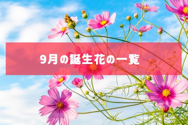 9月の誕生花の一覧 | 記念日・プレゼント・アレンジメント